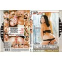 DVD BIG BUSTY WORKOUT 3